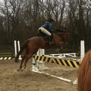Equestrian Jumper Shows at Graham Equestrian Center are a great for all levels.